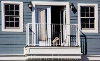 Art Photos - Dog On Balcony