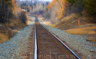 Art Photos - Train Tracks Into Forest