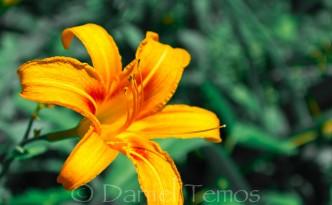 Nature Photos - Blooming Orange Flower