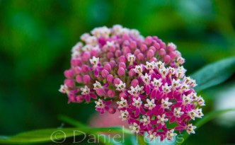 Nature Photos - Pink and White Flower