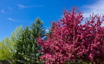 Nature Photos - Red Flower Tree