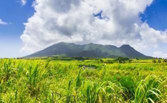 Nature Photos - St Kitts Mountain