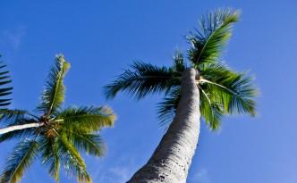 Nature Photos - Tall Palm Tree