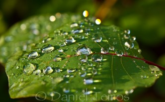 Nature Photos - Water Droplets Leaf