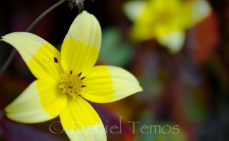Nature Photos - Yellow Flower